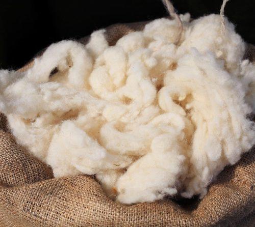 californian_living_fiber_wool-min